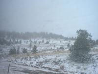 greyhound_scenery_snow